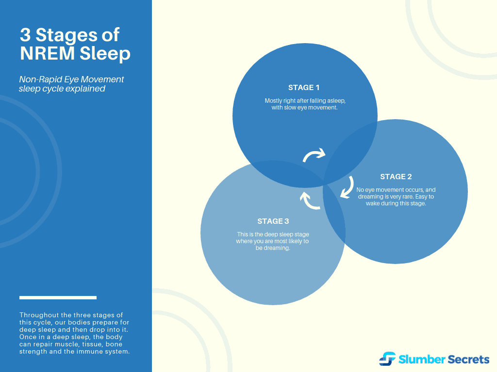Three stages of NERM sleep